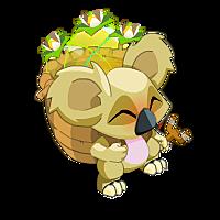 Visuel de Koalak Coco