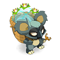 Visuel de Koalak Indigo