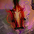 Wisp Life-in-a-Lantern.png