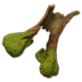 Prop-Hollowed old growth tree 2.png