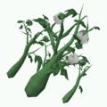 Plant-Cotton.png