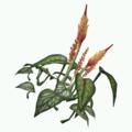 Plant-Sunblossom.png