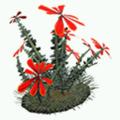 Prop-Red desert flower.png