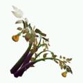 Plant-Amberleaf.png