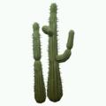 Prop-Double desert cactus.png