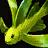 Icônes poissons - Imagespoissons Carpedesprairies