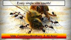 Elections CSM 8