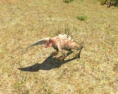 Grifferoche - autre espèce