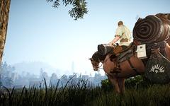 Monture : cheval