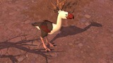 Oiseau de Terreur
