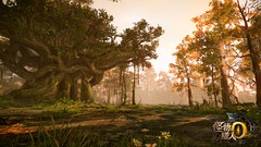 Forêt de l'Ermite