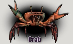 Du crabe au menu de Wurm Online