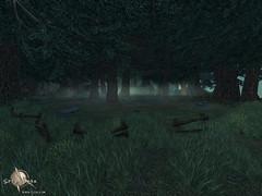 Mont des héros - forêt
