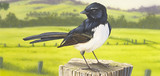 Bergeronnette (Wagtail)