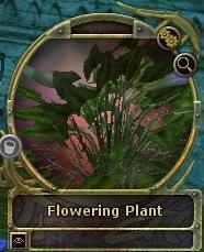 collectable: plante