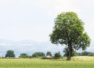 Cliquez sur l'image pour la voir en taille réelle  Nom : arbre.jpg Taille : 2712x1968 Poids : 598,8 Ko ID : 133275
