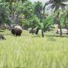 Pré-alpha : premier aperçu du gameplay de New Dawn