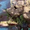 Mode de jeu : aperçu du Coeur des ruches du shooter Crucible (VOSTFR)