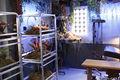 Cabinet-yewll-6.jpg