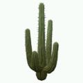 Prop-Desert cactus.png