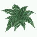 Prop-Jungle fern.png