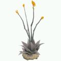 Prop-Dark desert succulent.png