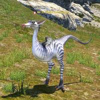 Raptor des plaines.jpg