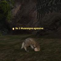 Musaraigne agressive.jpg