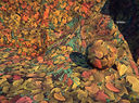 Landmark Texture-Dirt-Autumn Leaves.jpg