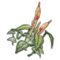 Icon props Biome Generic Plants Sunblossom Common01 256.png