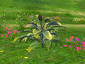 Plante de verdra.jpg