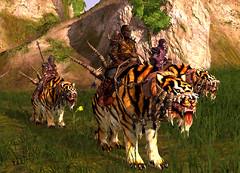 Monture : tigre