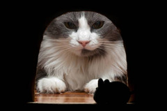 _light-19577_9327-quand-le-chat-n-est-pas-la-les-souris-dansent.jpg