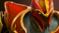 xx - Dragon knight sb