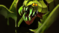 xx - Venomancer sb