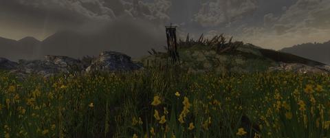 Le champ aux Iris
