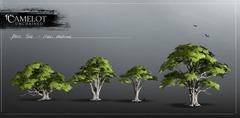 beech_model_tree