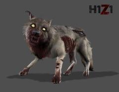 Halloween : loup zombie