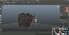 Ours - travail en cours